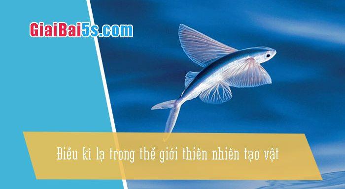 Phần thứ nhất : Văn miêu tả-II. Tả vật (đồ vật, con vật)-Bài số 9. Điều kì lạ trong thế giới thiên nhiên, tạo vật (cá biết bay)