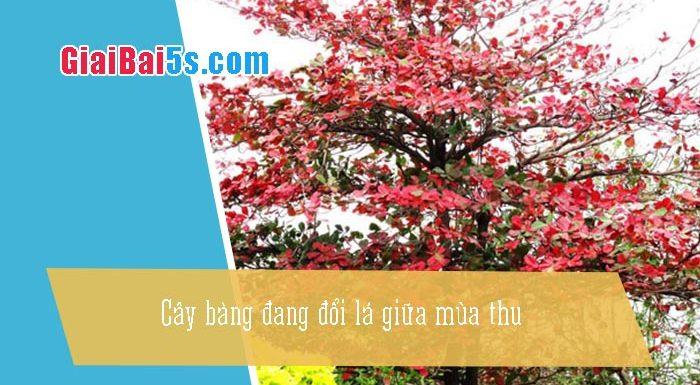 Phần thứ nhất : Văn miêu tả-III. Tả cỏ cây, hoa lá-Bài số 5. Em hãy tả một cây bàng đang đổi lá giữa mùa thu