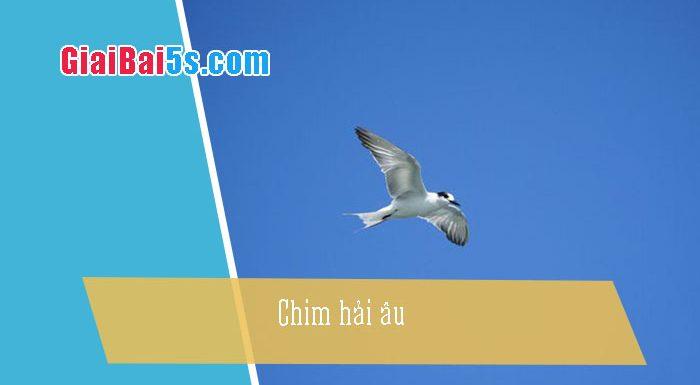 Phần thứ nhất : Văn miêu tả-II. Tả vật (đồ vật, con vật)-Bài số 8. Miêu tả một loài chim mà em biết (chim hải âu)