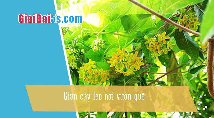 Phần thứ nhất : Văn miêu tả-III. Tả cỏ cây, hoa lá-Bài số 6. Miêu tả một giàn cây leo nơi vườn quê: Giàn thiên lý nhà em