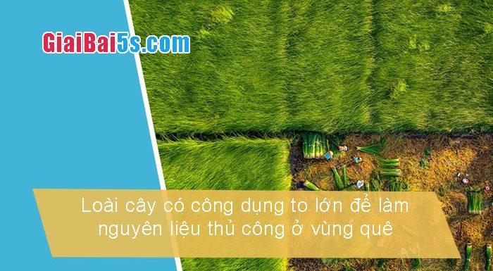 Phần thứ nhất : Văn miêu tả-III. Tả cỏ cây, hoa lá-Bài số 4. Kể và tả một loài cây và nói lên công dụng to lớn của nó để làmnguyên liệu thủ công ở vùng quê em