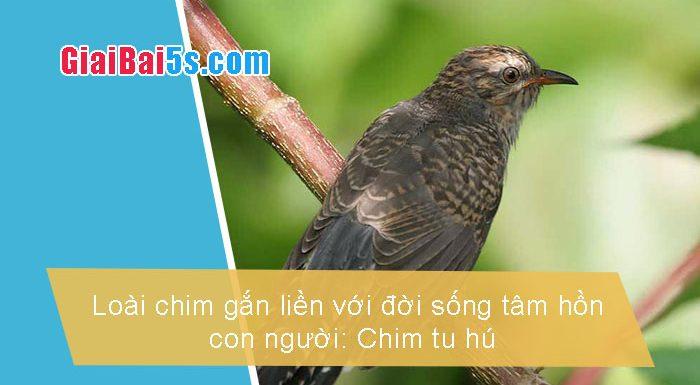 Phần thứ nhất : Văn miêu tả-II. Tả vật (đồ vật, con vật)-Bài số 11. Tả một loài chim gắn liền với đời sống con người: chim tu hú