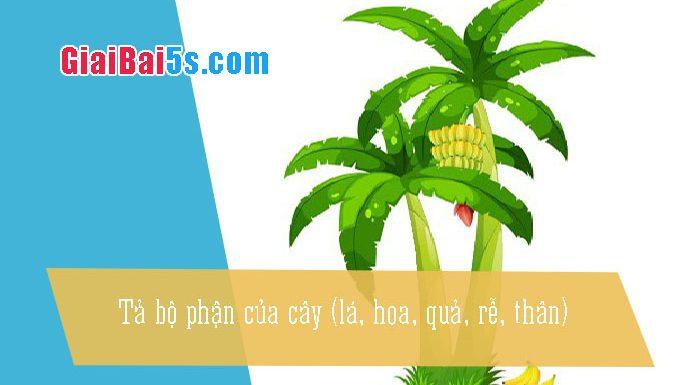 Phần thứ nhất : Văn miêu tả-III. Tả cỏ cây, hoa lá-Bài số 1. Viết một đoạn văn tả một bộ phận của cây (lá, hoa, quả, rễ, thân).