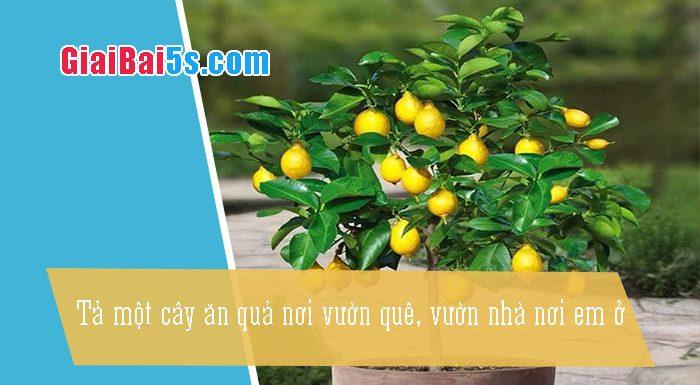 Phần thứ nhất : Văn miêu tả-III. Tả cỏ cây, hoa lá-Bài số 13. Hãy tả một cây ăn quả nơi vườn quê, vườn nhà nơi em ở