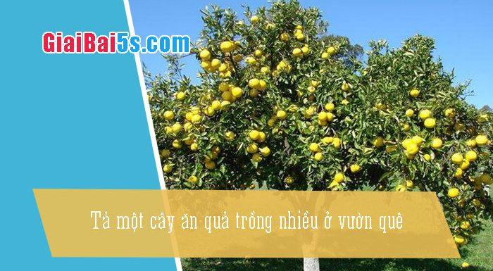Phần thứ nhất : Văn miêu tả-III. Tả cỏ cây, hoa lá-Bài số 12. Tả một cây ăn quả trồng nhiều ở vườn quê.