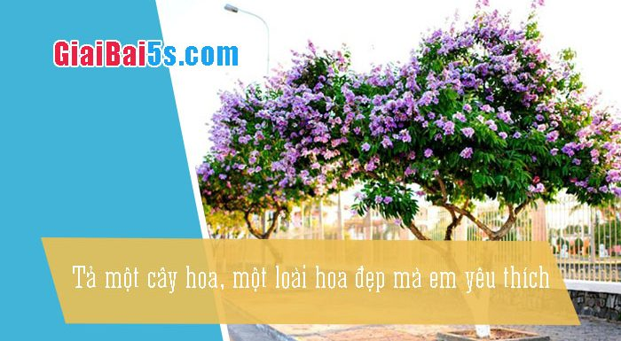 Phần thứ nhất : Văn miêu tả-III. Tả cỏ cây, hoa lá-Bài số 11. Em hãy tả một cây hoa, một loài hoa đẹp mà em yêu thích.