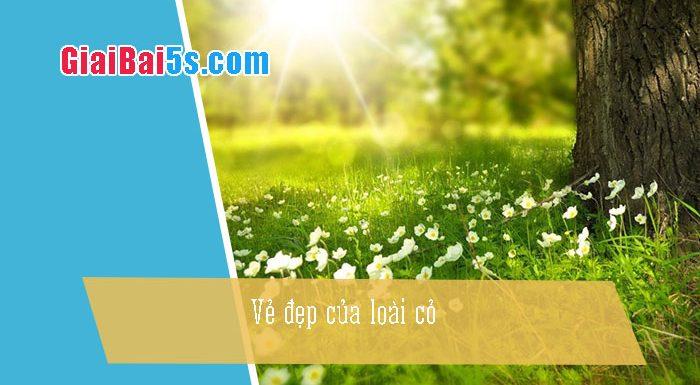 Phần thứ nhất : Văn miêu tả-III. Tả cỏ cây, hoa lá-Bài số 3. Viết một bài văn nói lên vẻ đẹp của loài cỏ